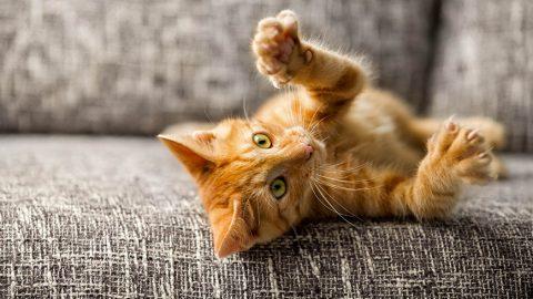 Sogno e son gatto